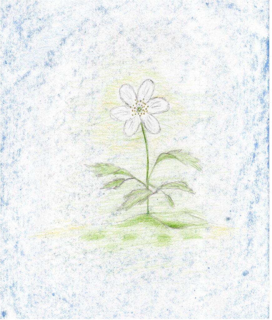 Ilustracja: Adam Krajewski, Waldorfska Szkoła Podstawowa im. Janusza Kroczaka
